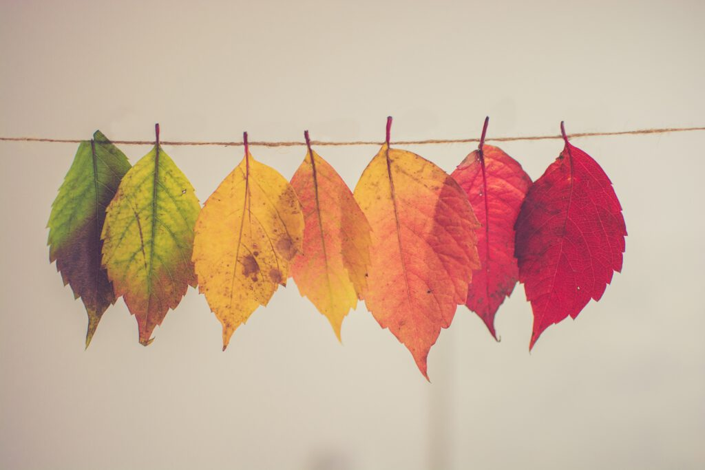 Terapia - Drzewo Moich Możliwości