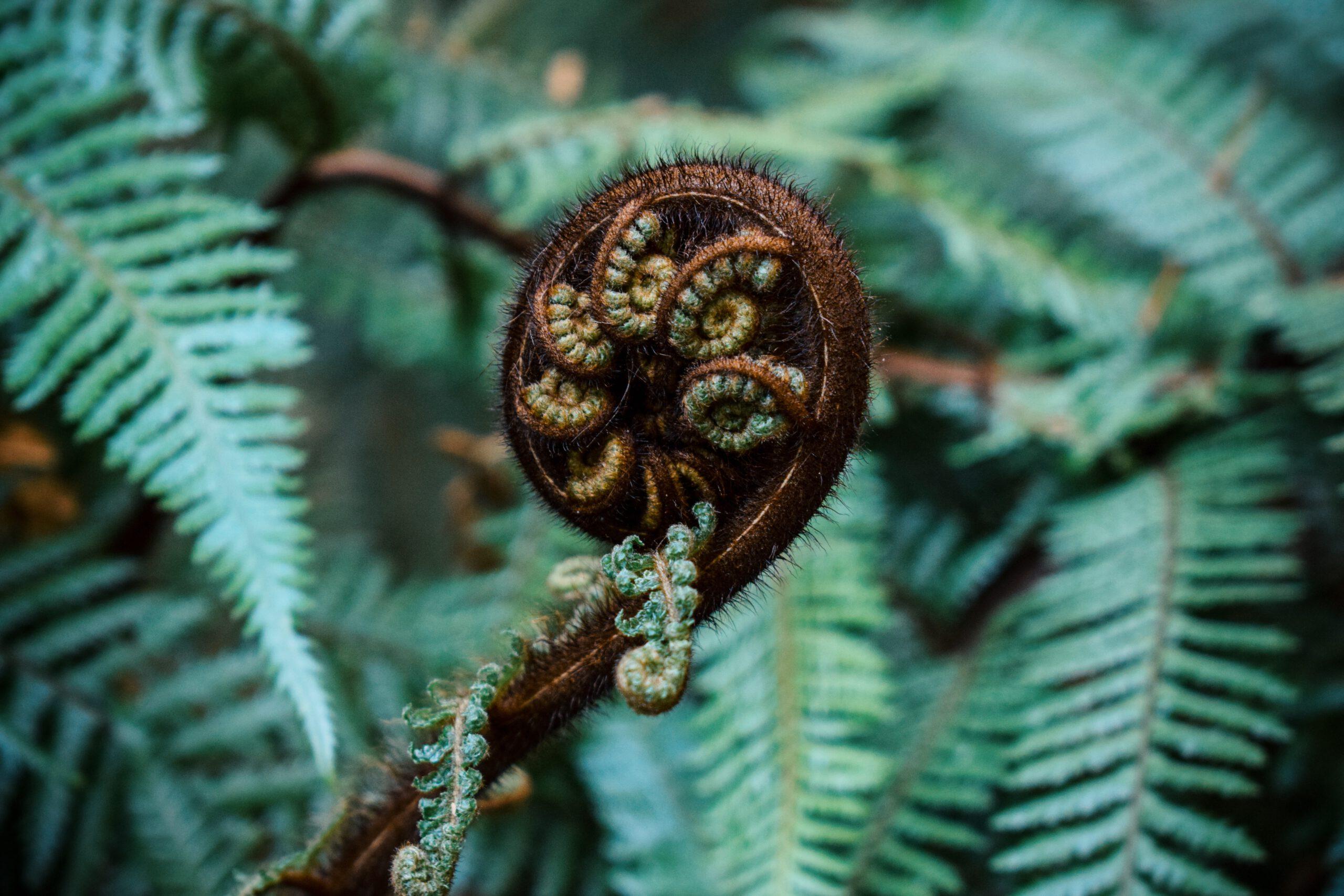 Terapia Kwiat Paproci Emma Lange